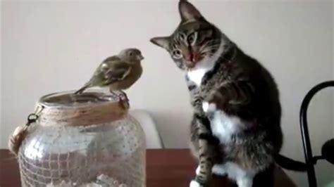 Gato y pájaro   Cat & Bird   YouTube
