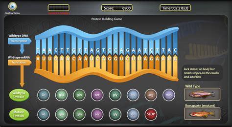 Genetic Mutations Game   BreakAway Games