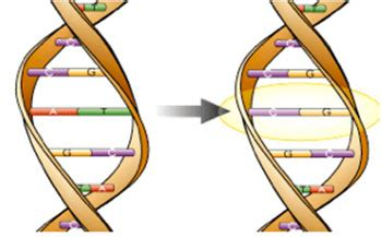 Genéticamente Curioso – Imagen Global