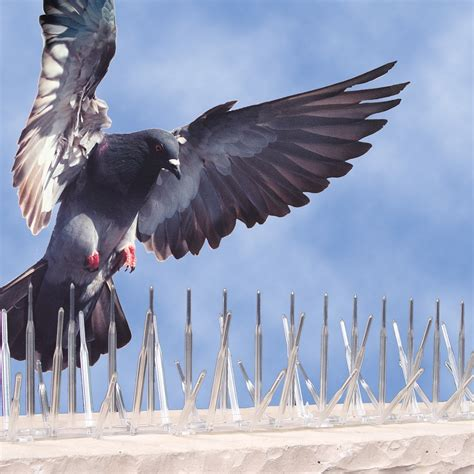 Get rid of pigeons in St Louis