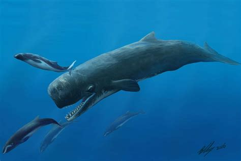 Giant killer sperm whales once cruised Australia s waters ...