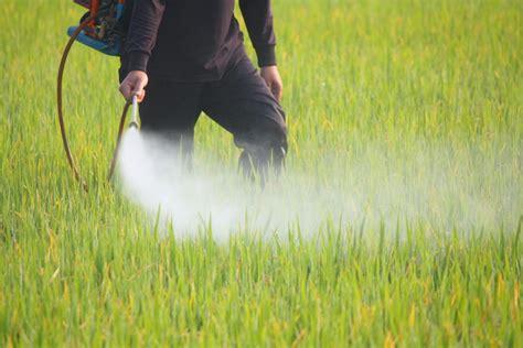 Giftige Pestizide schädigen Kinderlungen vergleichbar ...