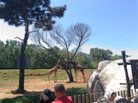 Girafe du zoo de Temara   Picture of Jardin Zoologique ...