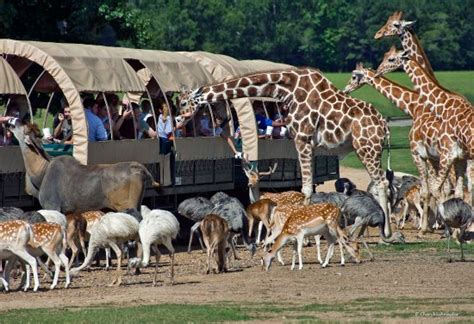 Global Wildlife Center is a safari park where you feed the ...