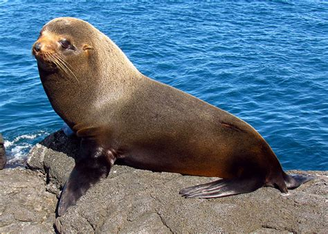 Glossary Sidebar   3/9   Descubriendo Galápagos