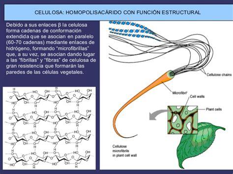 Glucidos estructura y funcion