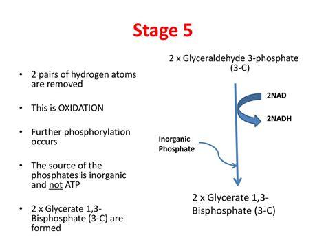 Glycolysis in the cytoplasm   презентация онлайн
