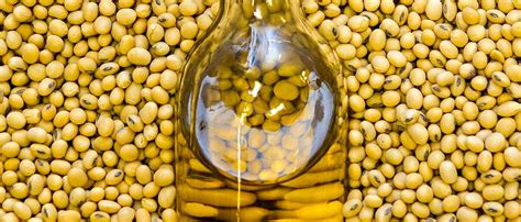 GMO label doesn t deter European companies  interest in ...