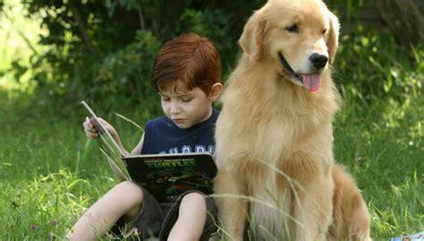 Golden Retriver La Mejor Mascota Para Los Niños   Cuidando ...