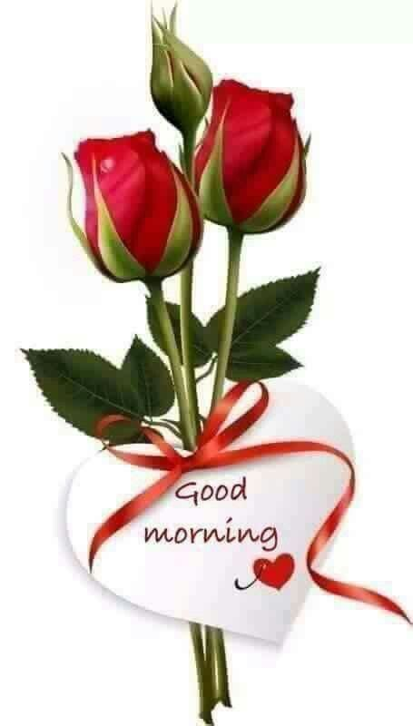 Good Morning Roses Image Quote   Good morning roses, Good ...