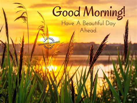 Good Morning Wishes   Good Morning Pictures ...