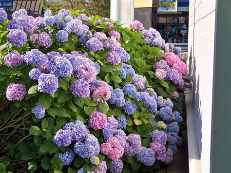 Good Plants for Shade in Kansas City | Best plants for ...
