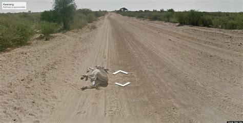 Google Maps  Street View Car Didn t Run Over A Donkey In ...