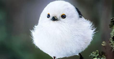 ¡Gorditos y bonitos, muchachos! Así lucen las aves ...