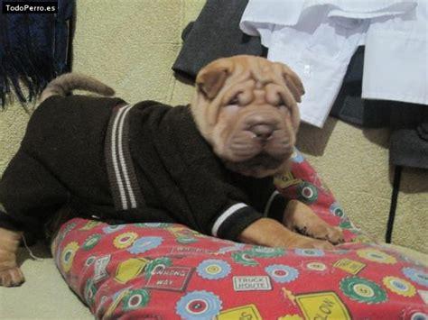 Gorky mi perro