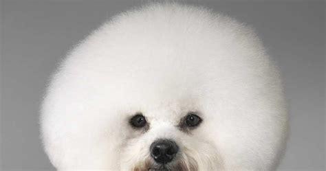 Gorky Park Digest: Va de perros