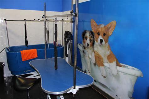 GosyGat | Tienda de Productos para Mascotas en Valencia