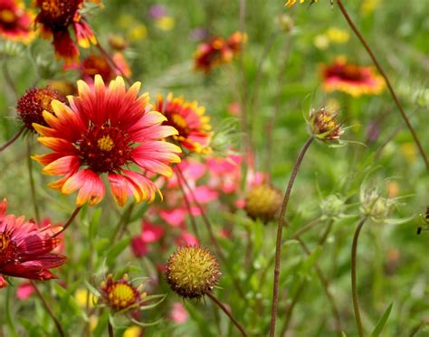 Gracie s Eggies: Texas Wildflowers