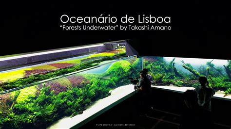 Grand Opening   Forests Underwater by Takashi Amano ...