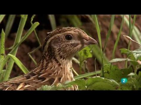 Grandes Documentales Alemania salvaje 2 Bosques   YouTube