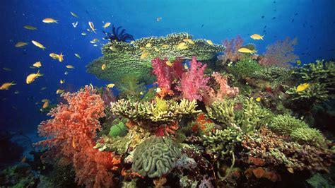 Grandes documentales   La vida en el arrecife  2    RTVE.es