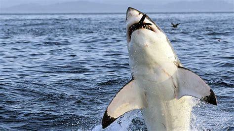 Grandes documentales   Mundo natural: La costa de los ...