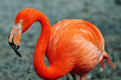 Gratis billeder : dyreliv, rød, næb, farverig, fauna, tæt ...