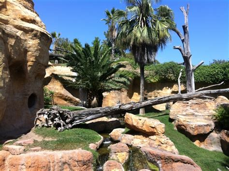 GREAT VALUE FAMILY PASS at the Bioparc in Fuengirola – Big ...
