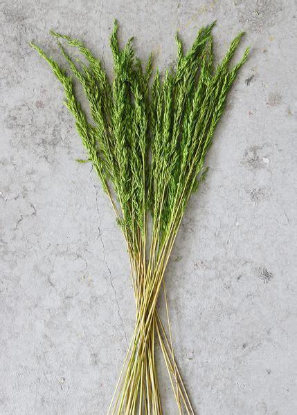 Green Dried Wild Oats | Wild oats, Rustic wedding diy ...