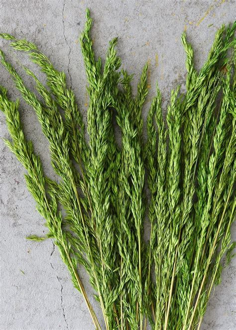 Green Dried Wild Oats  With images  | Grass, Wild oats ...