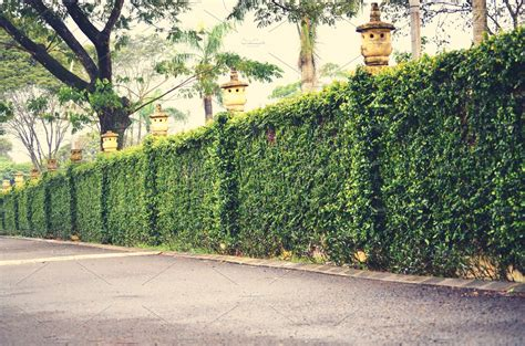 Green fence and hedge ~ Architecture Photos ~ Creative Market