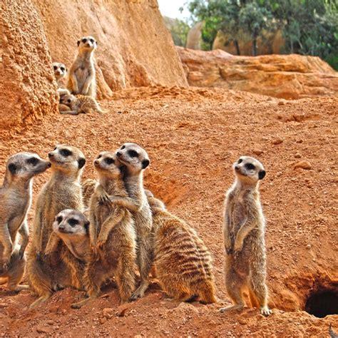Green Press Comunicacion Cursos de expertos en animales ...