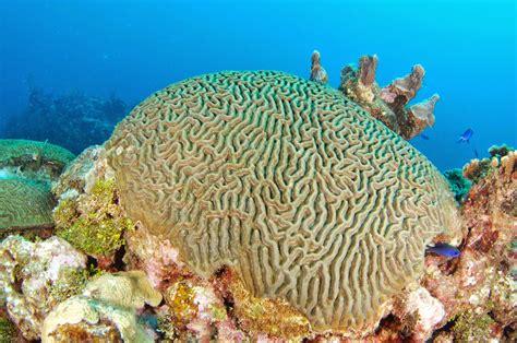 Greenwichdiving: Esponjas marinas