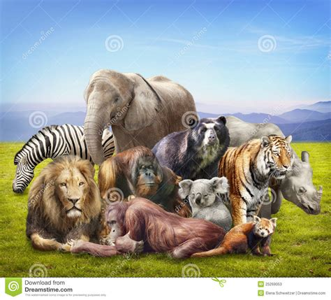 Group of animals stock image. Image of mammals, panda ...