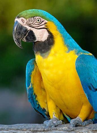 Grupo 1   Aves do Pantanal