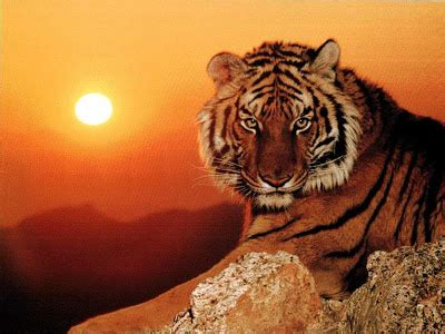 Grupo 11: 2010 el Año del Tigre de Metal