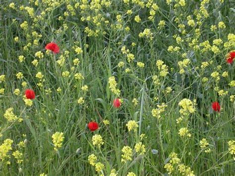 Grupo Borau   Métodos de control de malas hierbas