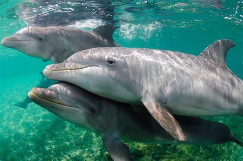 Guía completa sobre delfines en AreaDelfines.com