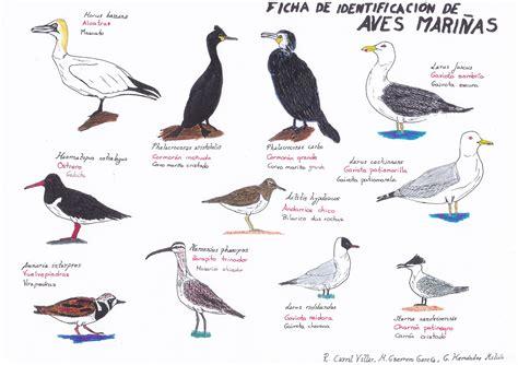 Guía de identificación de aves costeras para educación ...