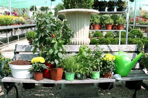 Guia para comprar plantas