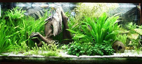 Guía para el acuario plantado   AcuariosDIY
