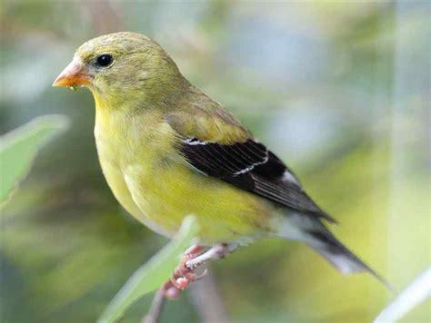HabitantesDeLaCiudad: Pájaros silvestres, hermosos ...