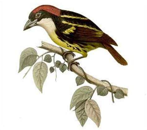 Hábitat y distribución de las aves ¿dónde viven las aves?