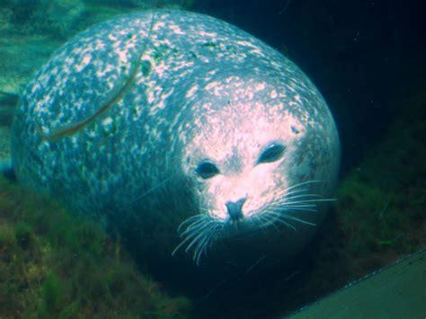 HADAS EN VUELO: ANIMALES A SALVO: OCEANOGRAFIC DE VALENCIA 2