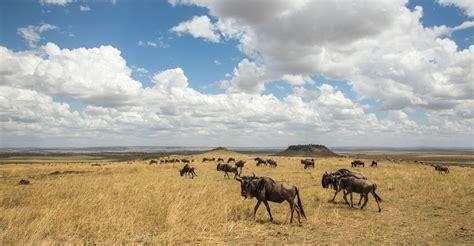 Hakuna Matata: mucho más que dos palabras   Rhino Africa Blog