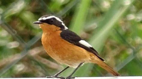 Hallan tres especies nuevas de pájaros en el Delta de l ...
