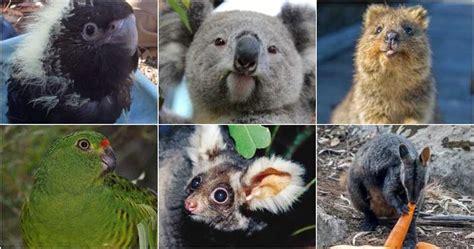 Han muerto mil millones de animales de especies casi en la ...
