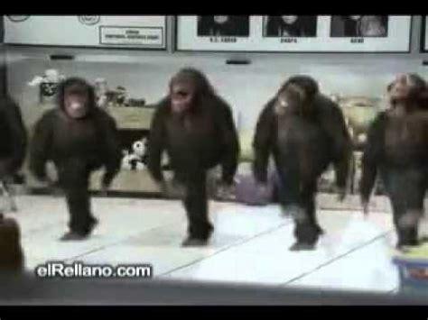 Happy Birthday Monkey Funny Video   YouTube