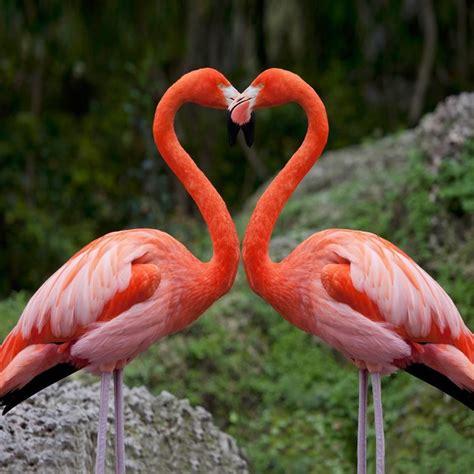 Happy Valentine s Day!   Flamingo, Pink flamingos ...
