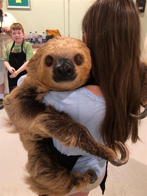 Hattiesburg Zoo – Sloth Experience